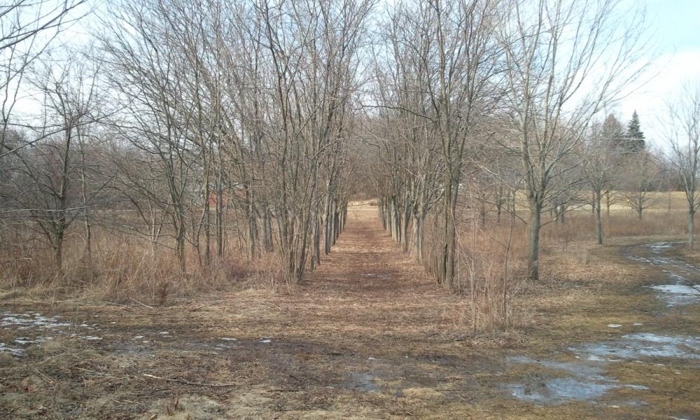 West Main Park