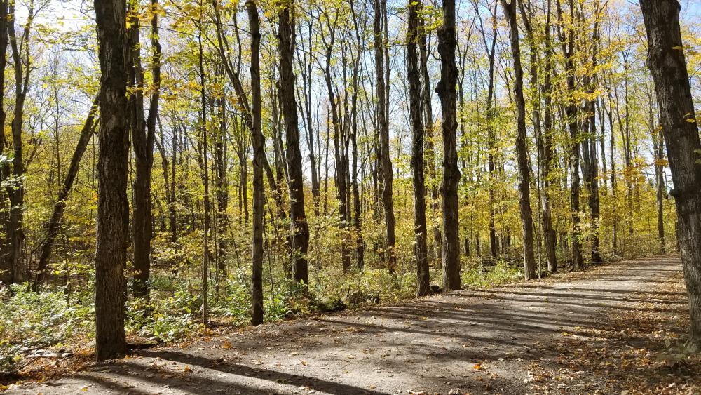 Bois de Belle-Rivière
